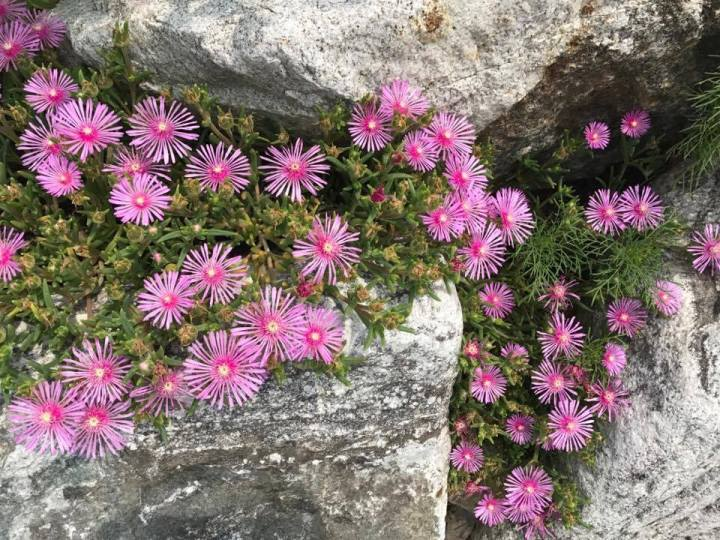 Flowers on rocks (2)